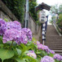 梅雨の風物詩♪東京都内の紫陽花(あじさい)名所・人気スポット6選