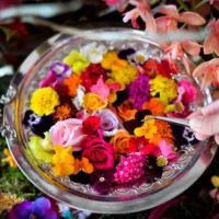 食用花を摘んでドリンクをカスタマイズ&撮影できる体験型アートイベント 「おいしい花畑」