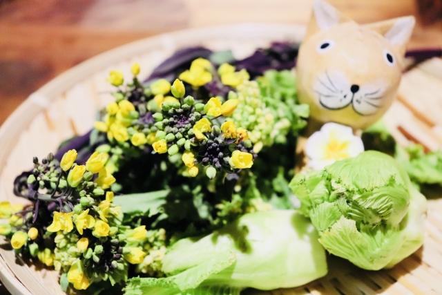 春は痩せやすい!?今こそダイエットを始めるべき理由と方法